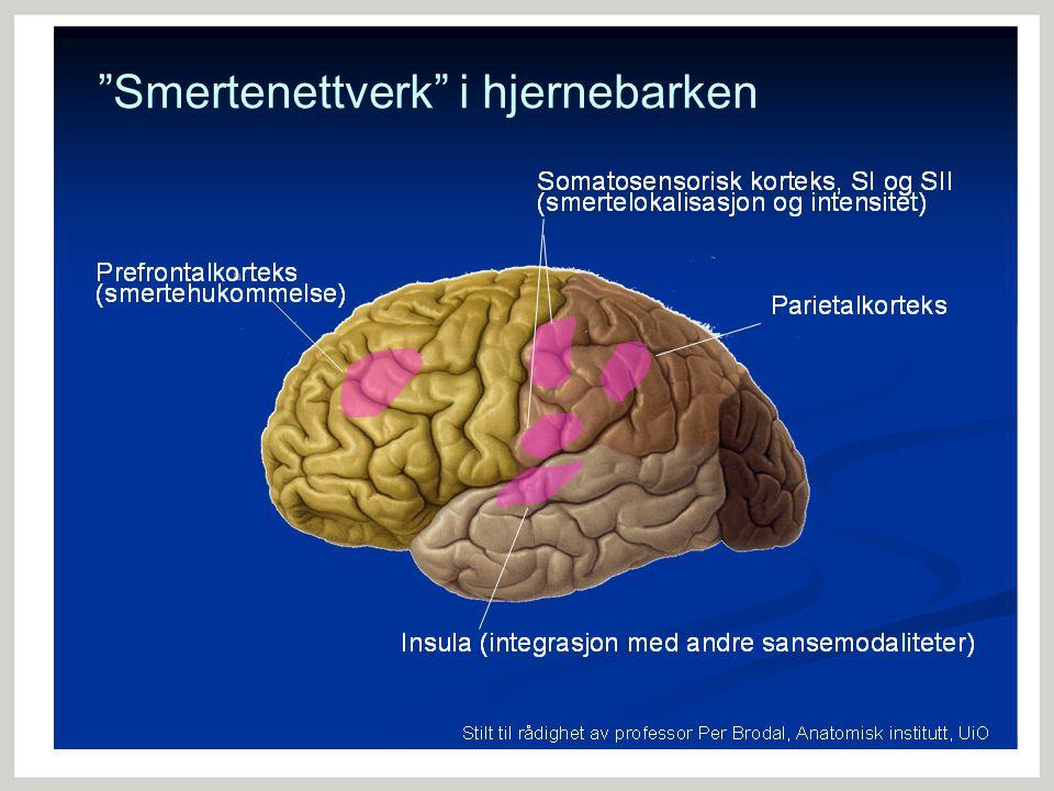 Smertenettverk i hjernebarken