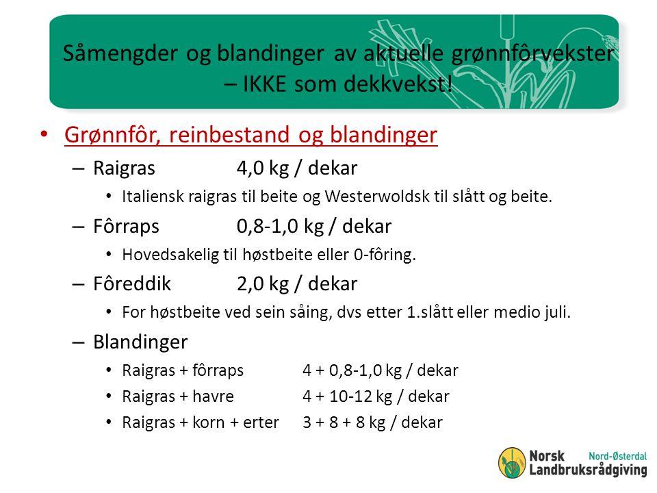 Såmengder og blandinger av aktuelle grønnfôrvekster – IKKE som dekkvekst!