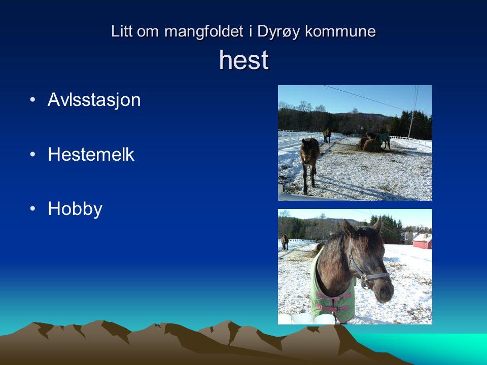 Litt om mangfoldet i Dyrøy kommune hest