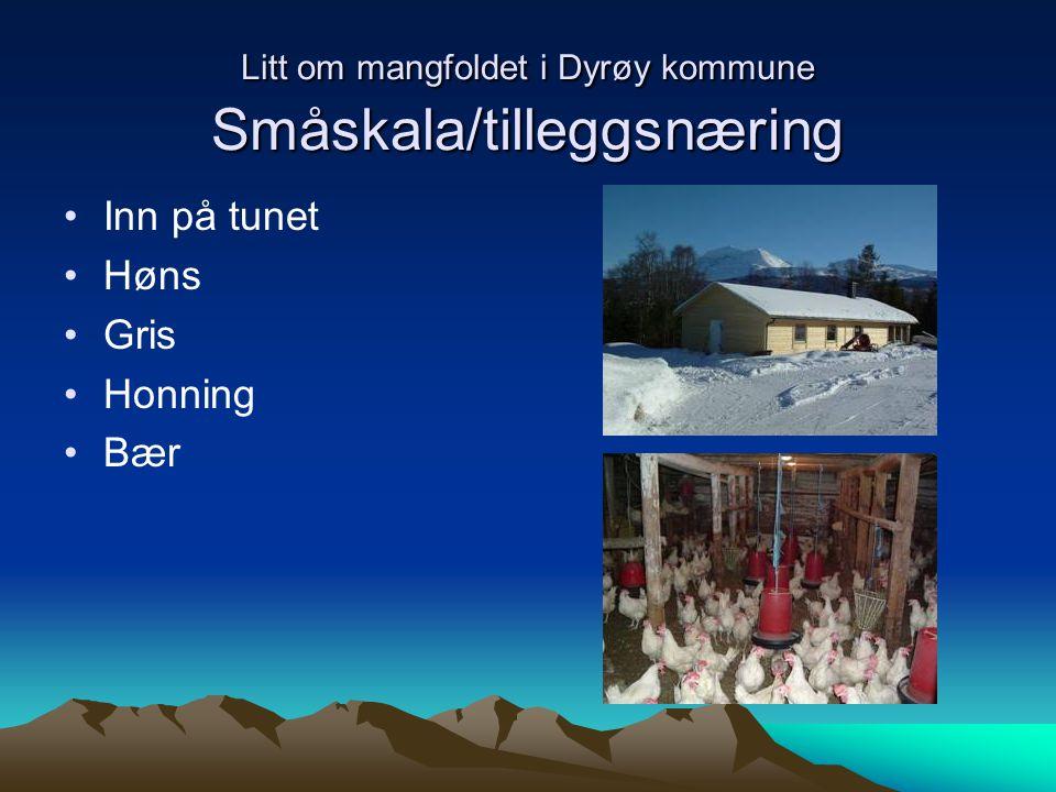 Litt om mangfoldet i Dyrøy kommune Småskala/tilleggsnæring