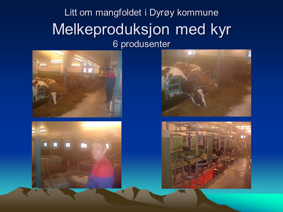 Litt om mangfoldet i Dyrøy kommune Melkeproduksjon med kyr 6 produsenter