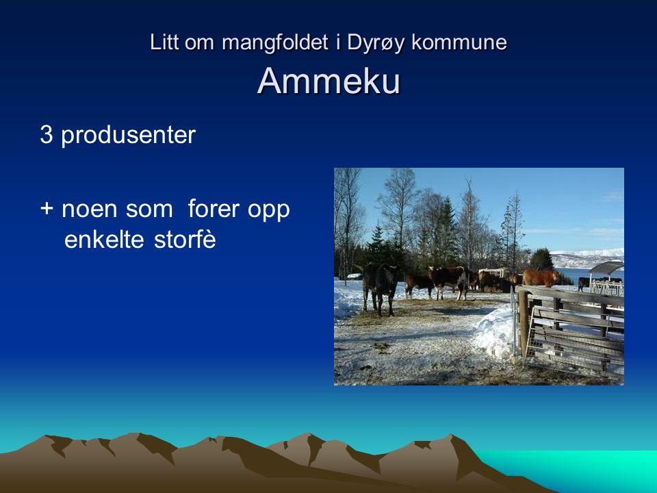 Litt om mangfoldet i Dyrøy kommune Ammeku