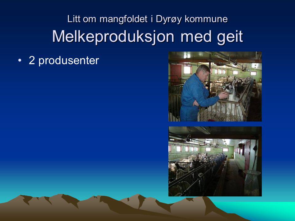 Litt om mangfoldet i Dyrøy kommune Melkeproduksjon med geit