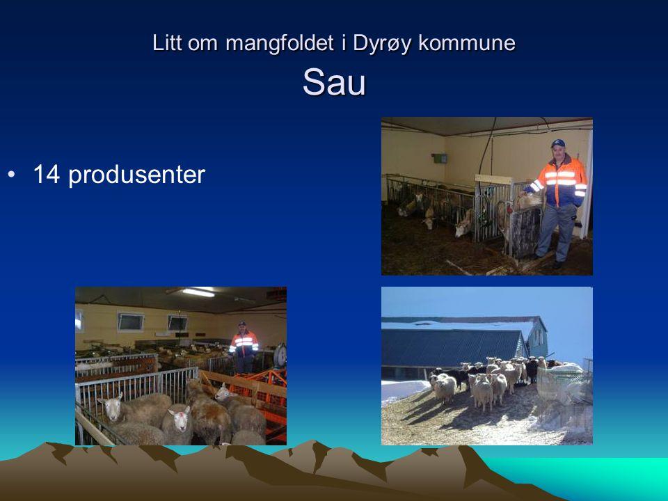 Litt om mangfoldet i Dyrøy kommune Sau
