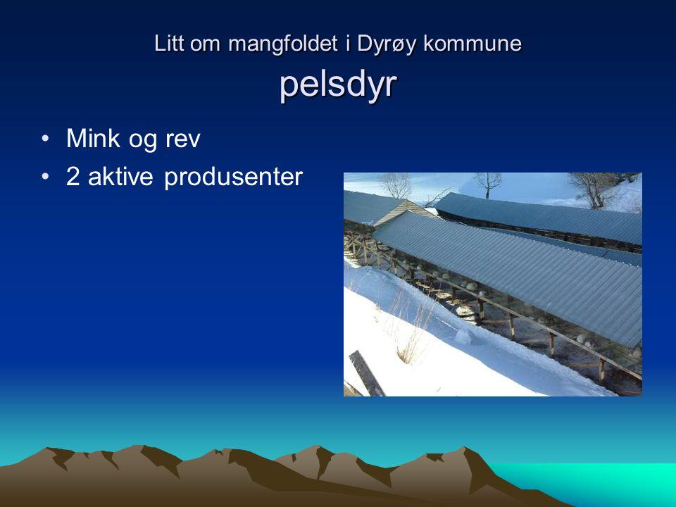 Litt om mangfoldet i Dyrøy kommune pelsdyr