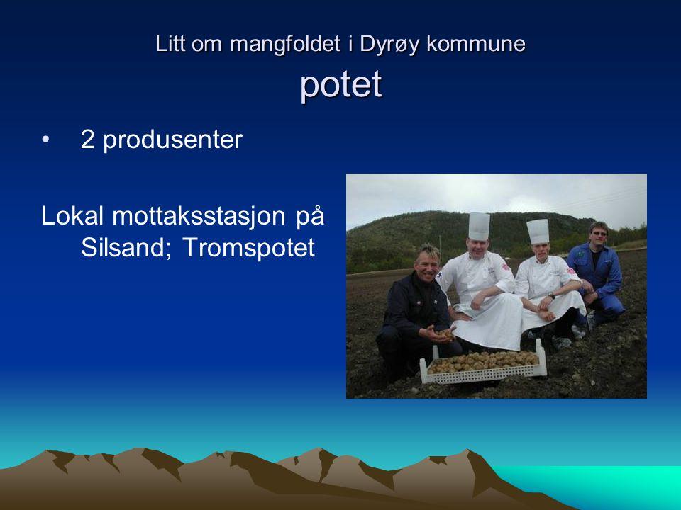Litt om mangfoldet i Dyrøy kommune potet