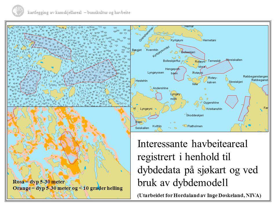 kartlegging av kamskjellareal – bunnkultur og havbeite