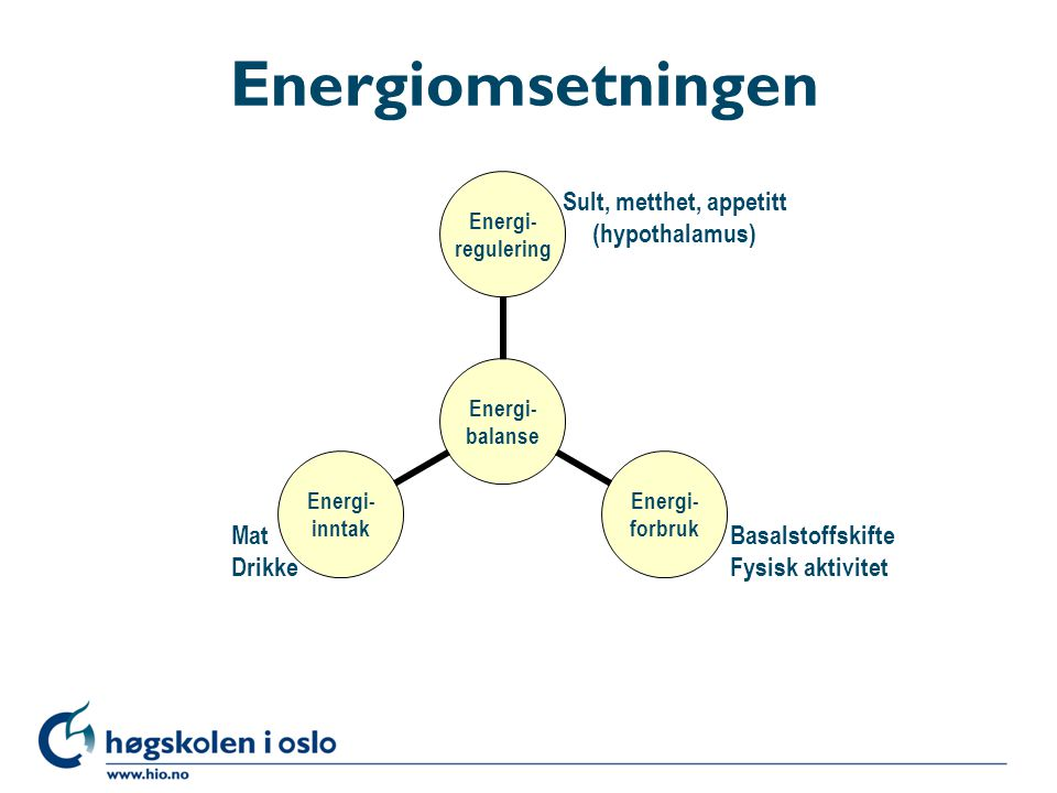 Energiomsetningen Sult, metthet, appetitt (hypothalamus) Mat Drikke