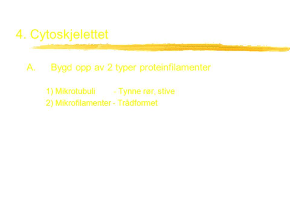 4. Cytoskjelettet A. Bygd opp av 2 typer proteinfilamenter