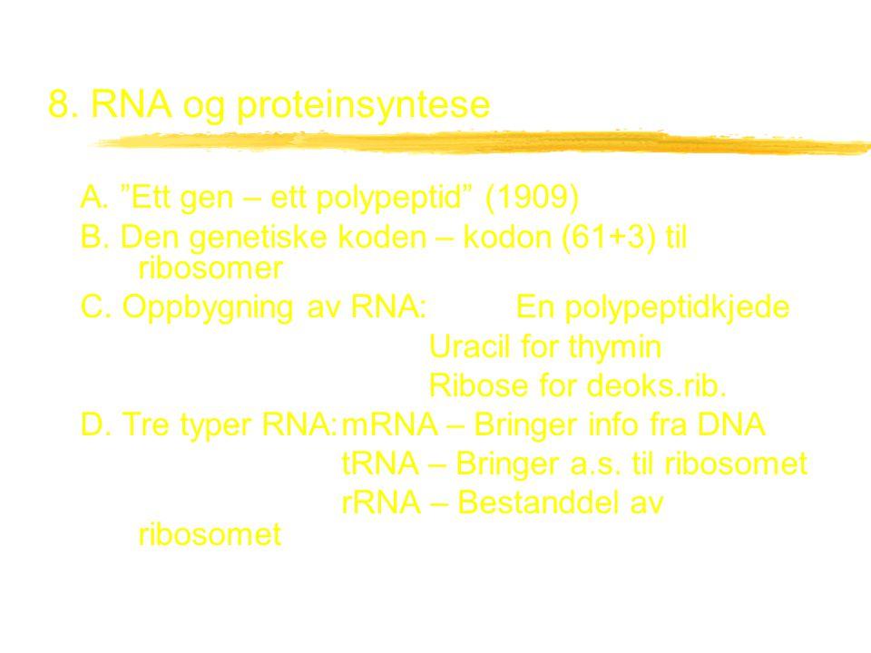 8. RNA og proteinsyntese A. Ett gen – ett polypeptid (1909)