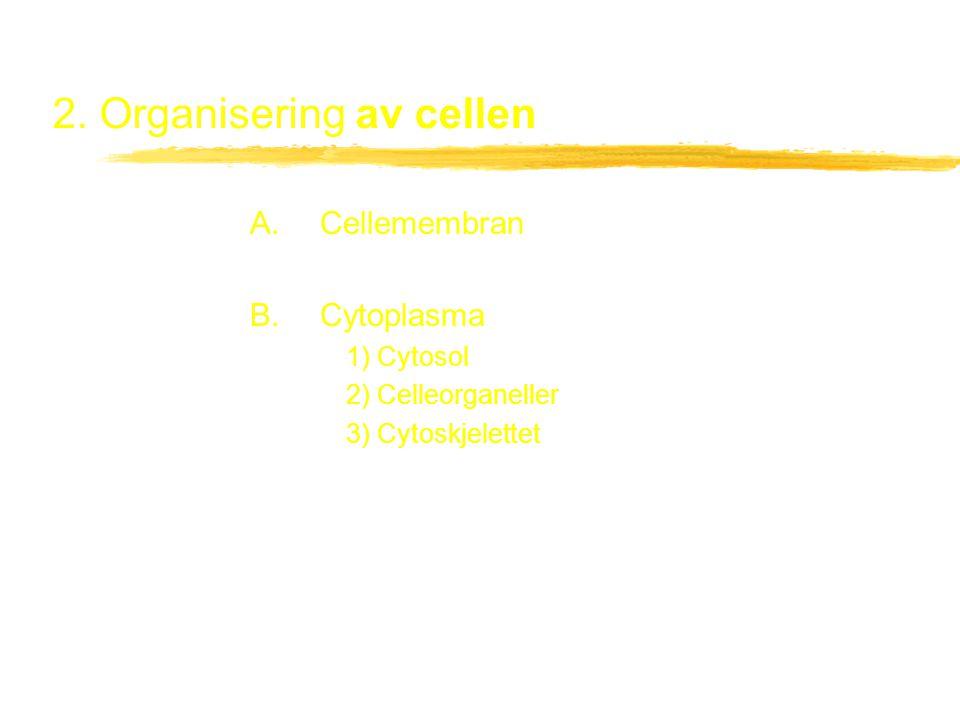2. Organisering av cellen