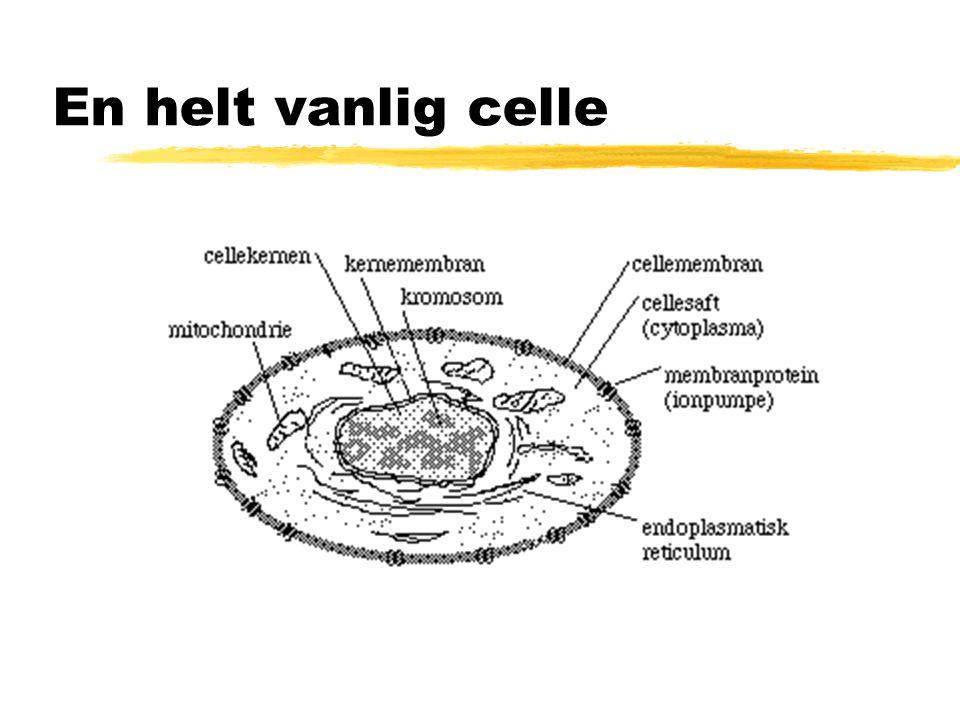En helt vanlig celle