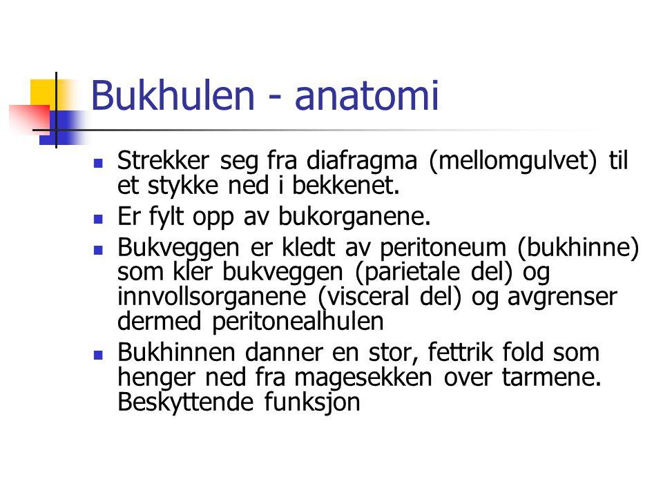 Bukhulen - anatomi Strekker seg fra diafragma (mellomgulvet) til et stykke ned i bekkenet. Er fylt opp av bukorganene.
