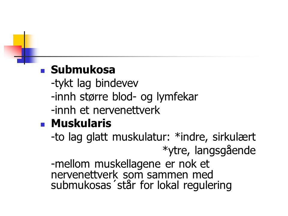 Submukosa -tykt lag bindevev. -innh større blod- og lymfekar. -innh et nervenettverk. Muskularis.