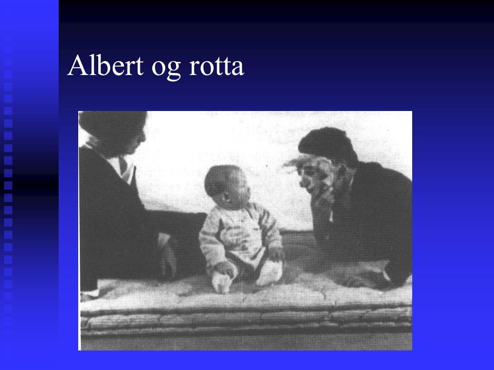 Albert og rotta Watson som plager Albert
