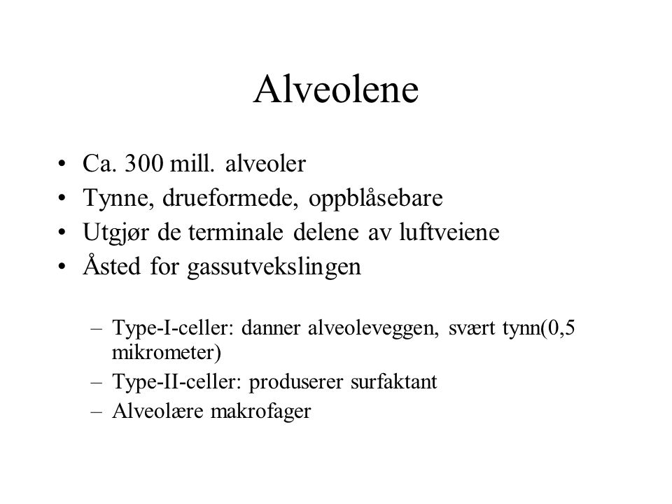 Alveolene Ca. 300 mill. alveoler Tynne, drueformede, oppblåsebare