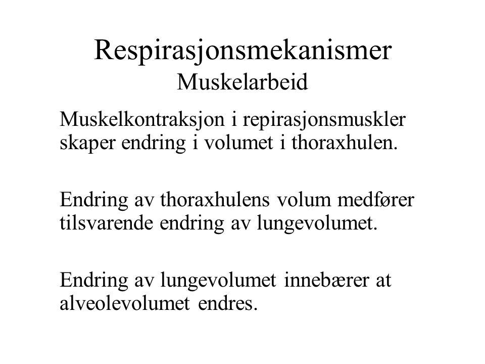 Respirasjonsmekanismer Muskelarbeid
