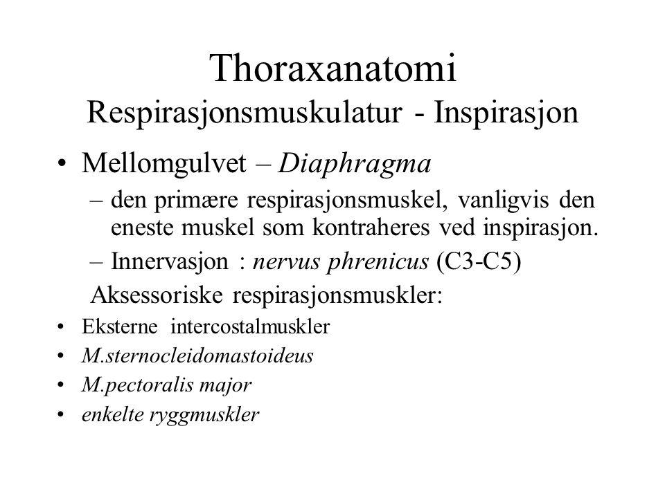 Thoraxanatomi Respirasjonsmuskulatur - Inspirasjon