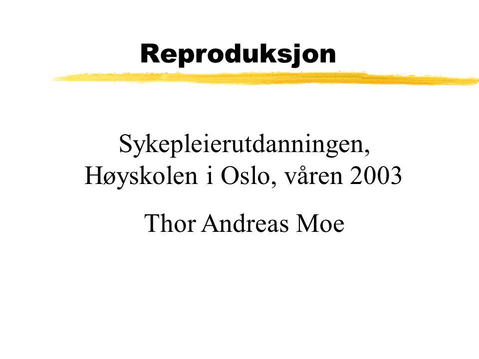 Sykepleierutdanningen, Høyskolen i Oslo, våren 2003