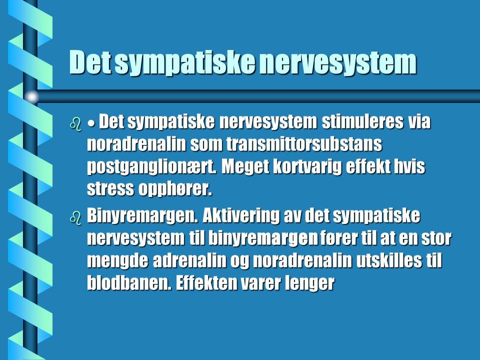 Det sympatiske nervesystem