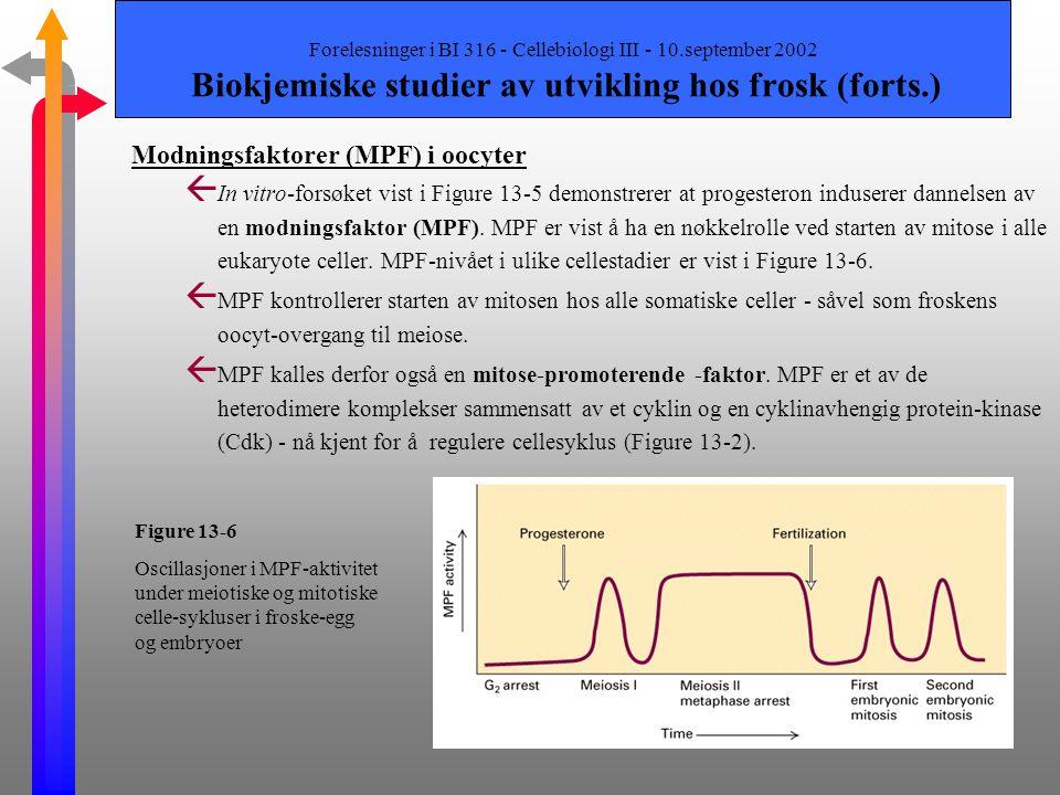 Modningsfaktorer (MPF) i oocyter