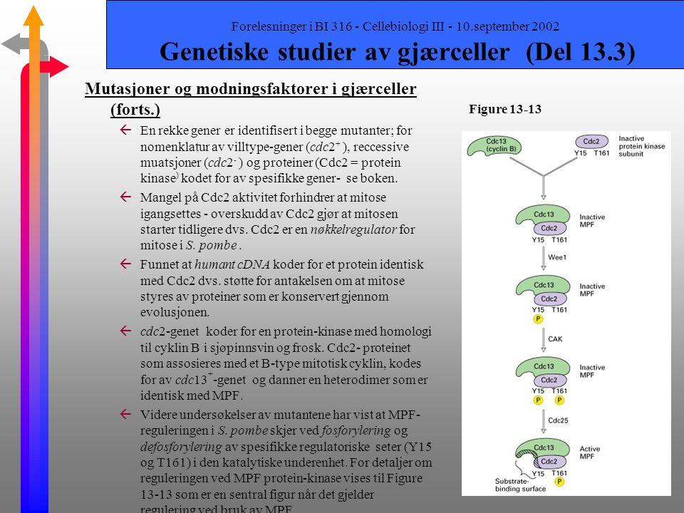 Mutasjoner og modningsfaktorer i gjærceller (forts.)