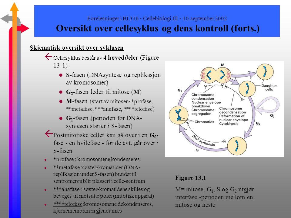 Skjematisk oversikt over syklusen