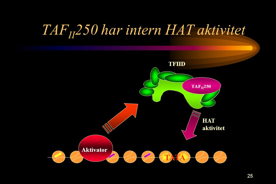 TAFII250 har intern HAT aktivitet