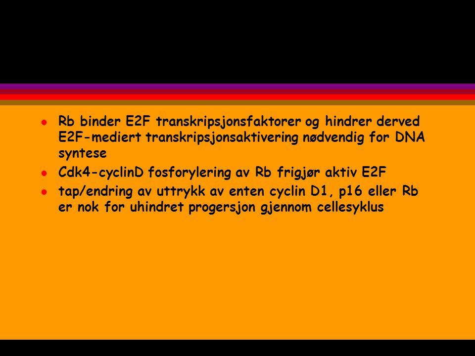 Rb binder E2F transkripsjonsfaktorer og hindrer derved E2F-mediert transkripsjonsaktivering nødvendig for DNA syntese