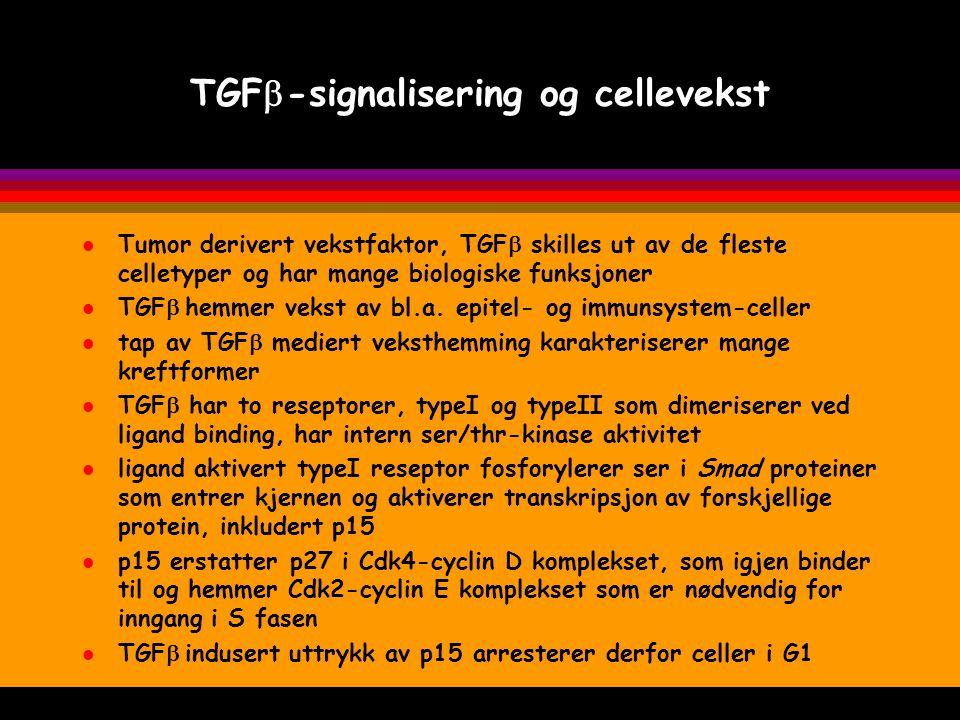 TGFb-signalisering og cellevekst