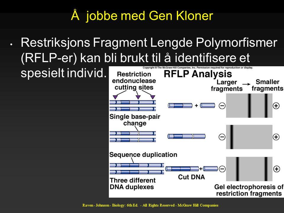 Å jobbe med Gen Kloner Restriksjons Fragment Lengde Polymorfismer (RFLP-er) kan bli brukt til å identifisere et spesielt individ.
