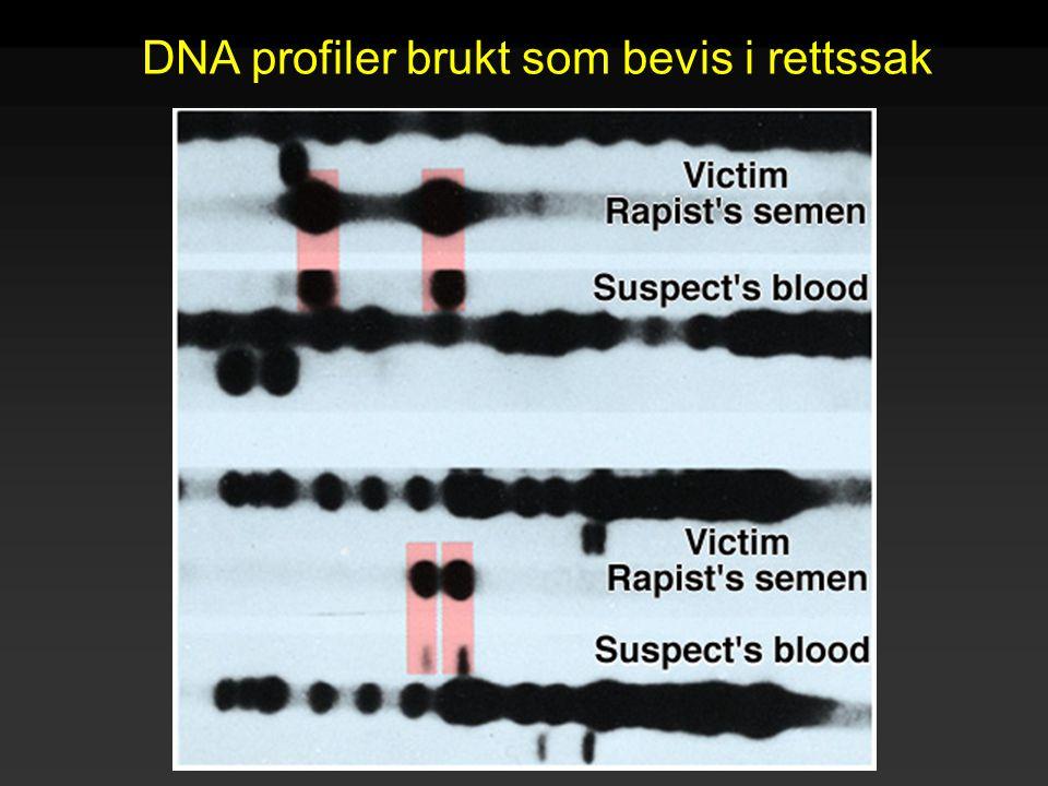 DNA profiler brukt som bevis i rettssak