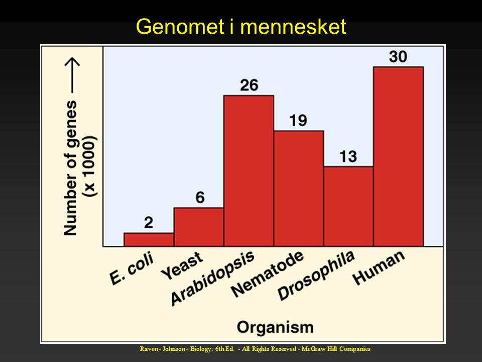 Genomet i mennesket Ikke så stor forskjell i antall gener som man skulle tro.