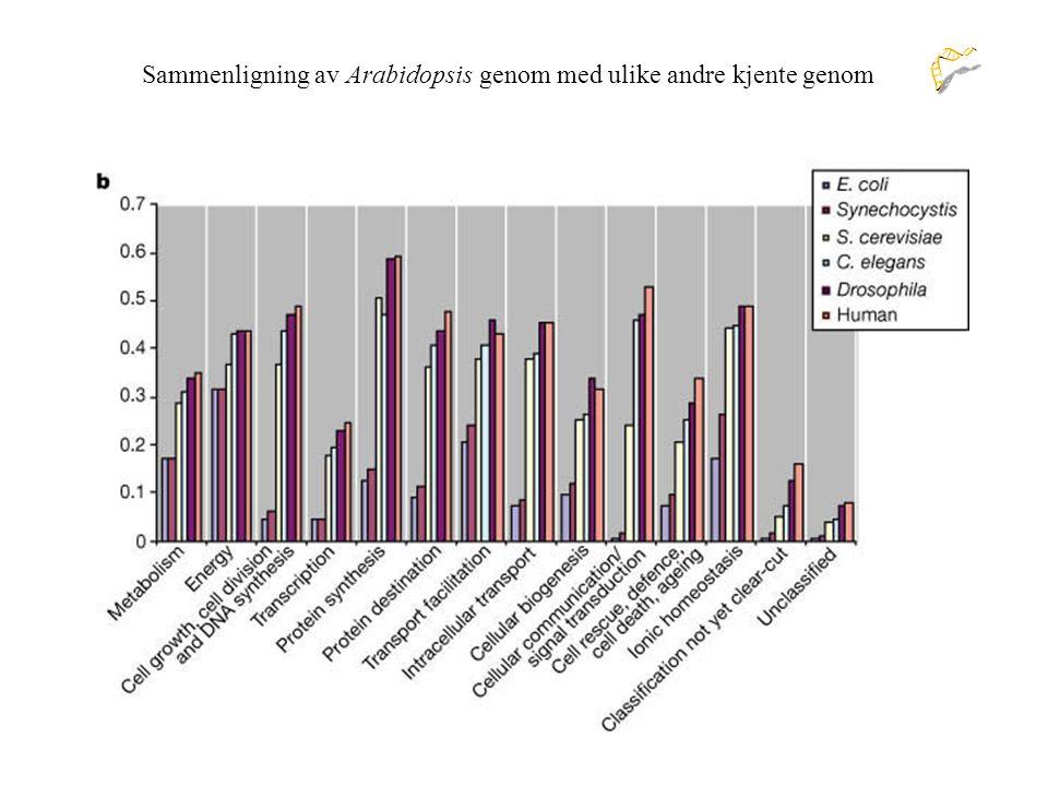 Sammenligning av Arabidopsis genom med ulike andre kjente genom