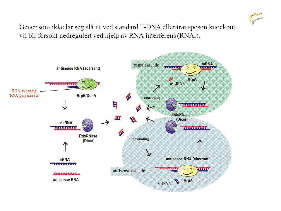 vil bli forsøkt nedregulert ved hjelp av RNA interferens (RNAi).