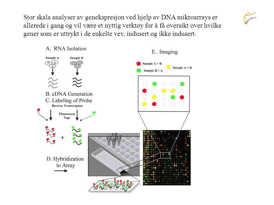Stor skala analyser av genekspresjon ved hjelp av DNA mikroarrays er