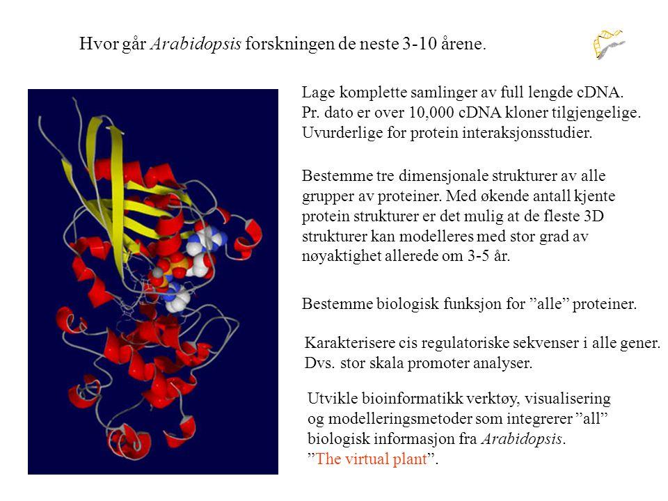Hvor går Arabidopsis forskningen de neste 3-10 årene.