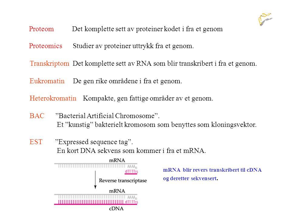 Det komplette sett av proteiner kodet i fra et genom