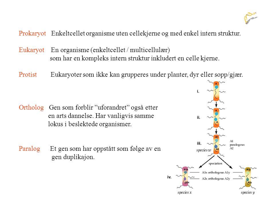 Prokaryot Enkeltcellet organisme uten cellekjerne og med enkel intern struktur.