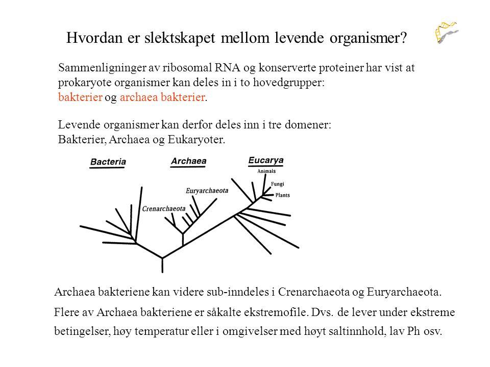 Hvordan er slektskapet mellom levende organismer
