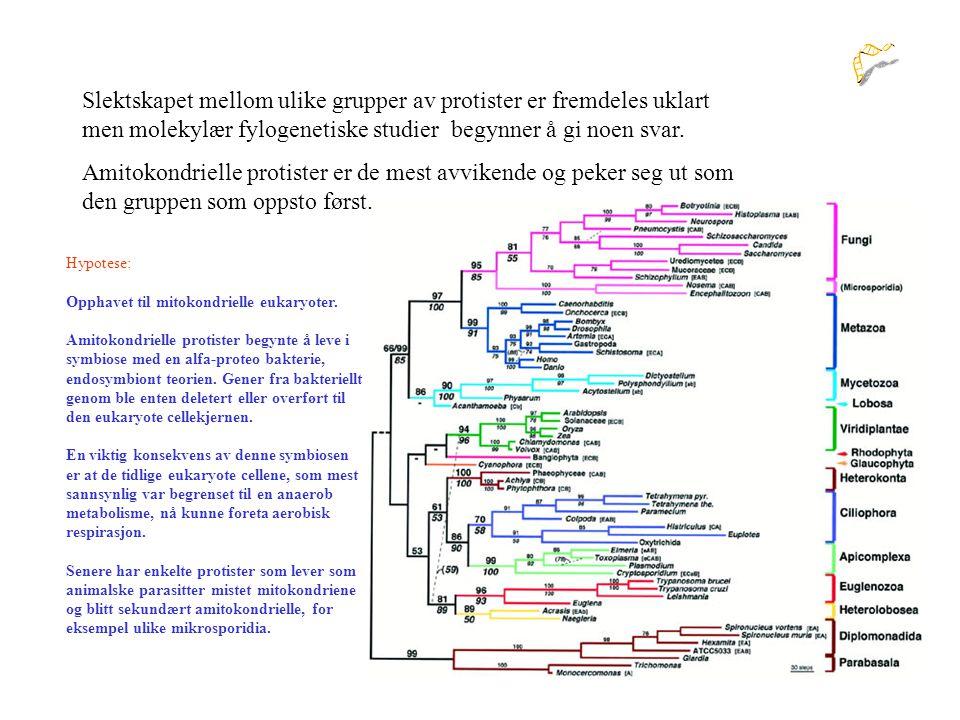 Slektskapet mellom ulike grupper av protister er fremdeles uklart