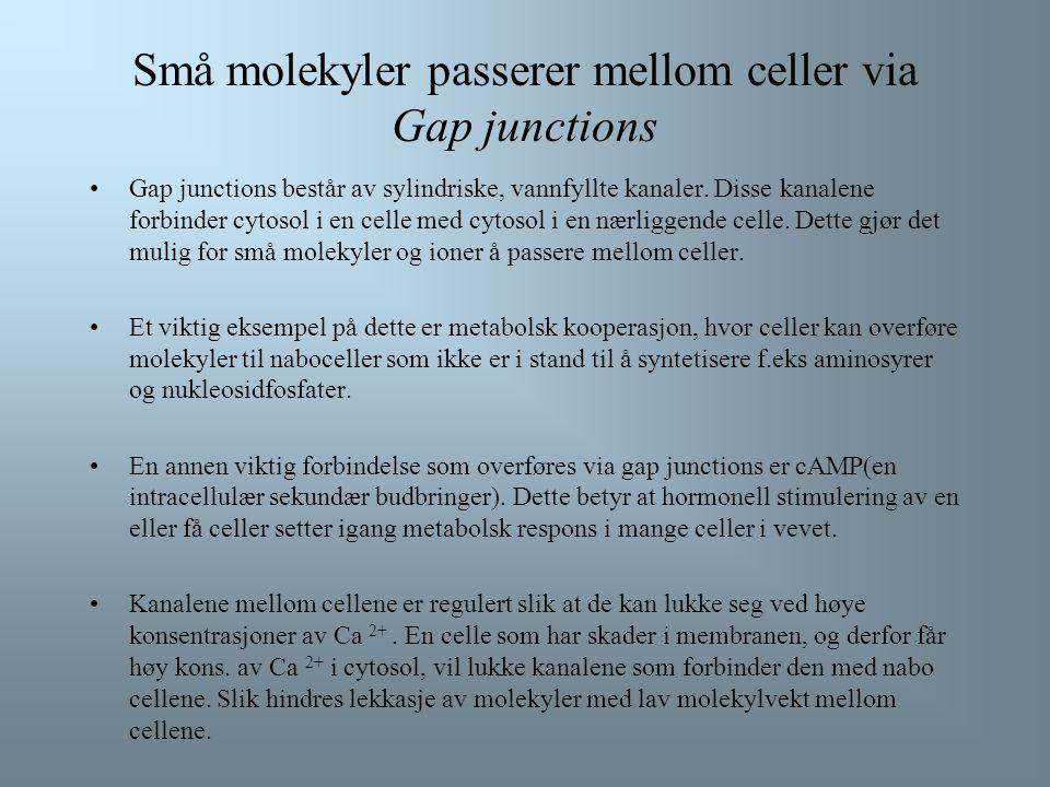 Små molekyler passerer mellom celler via Gap junctions