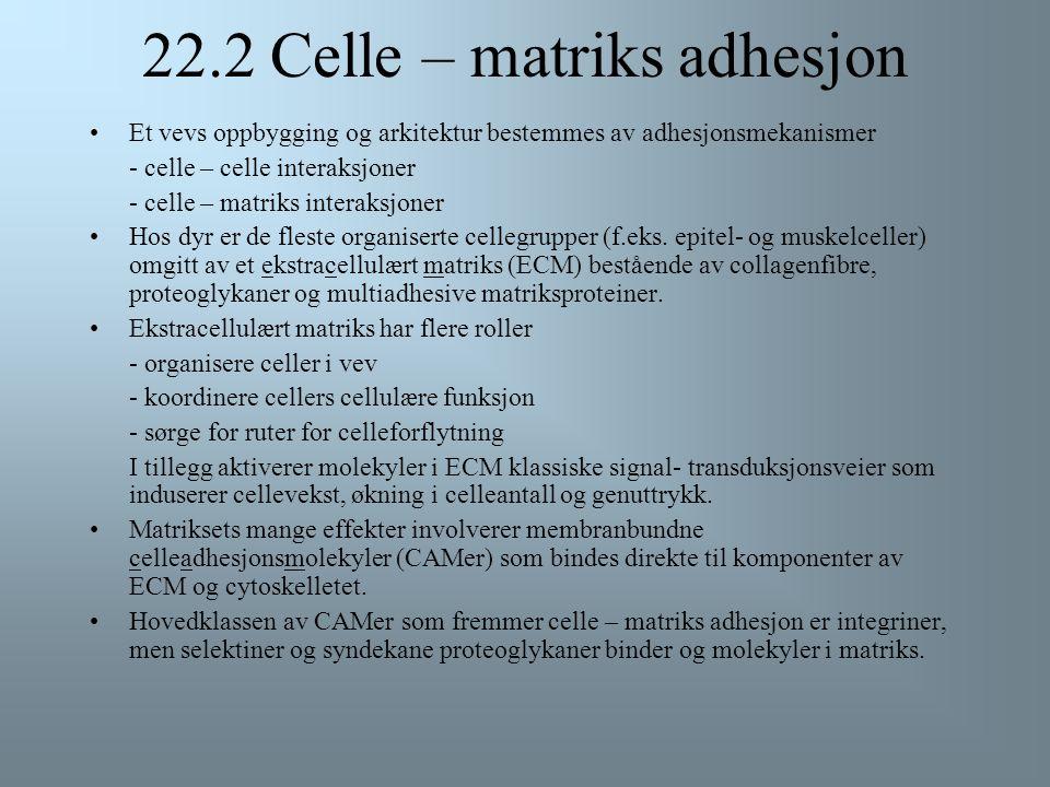 22.2 Celle – matriks adhesjon