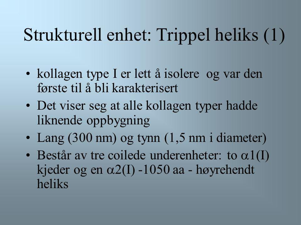 Strukturell enhet: Trippel heliks (1)