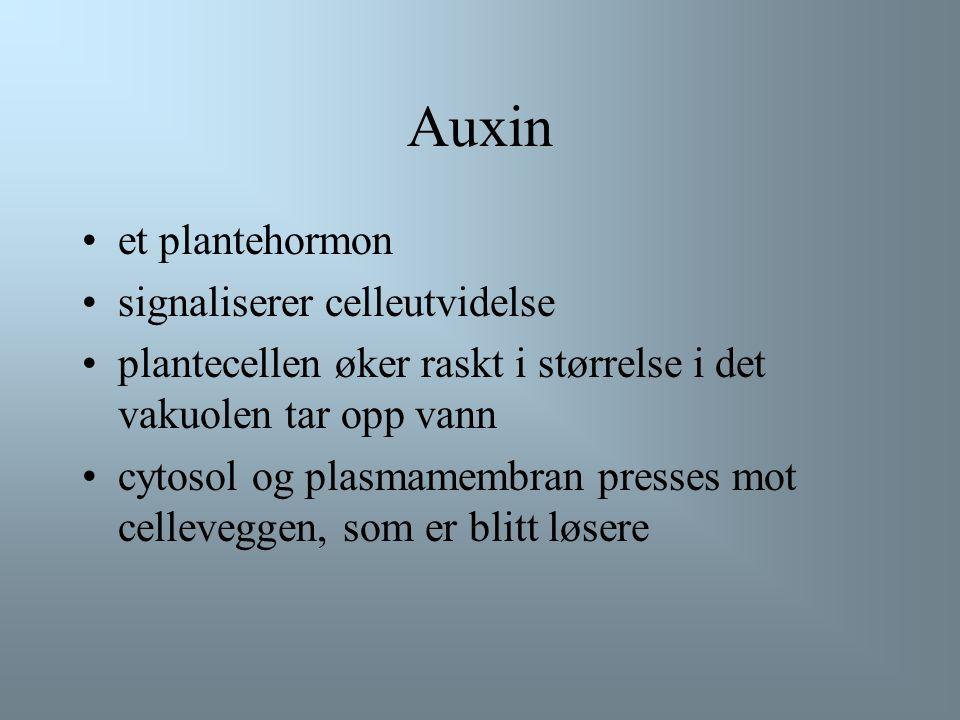 Auxin et plantehormon signaliserer celleutvidelse