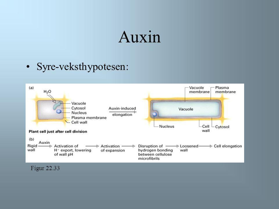 Auxin Syre-veksthypotesen: Syreveksthypotesen: