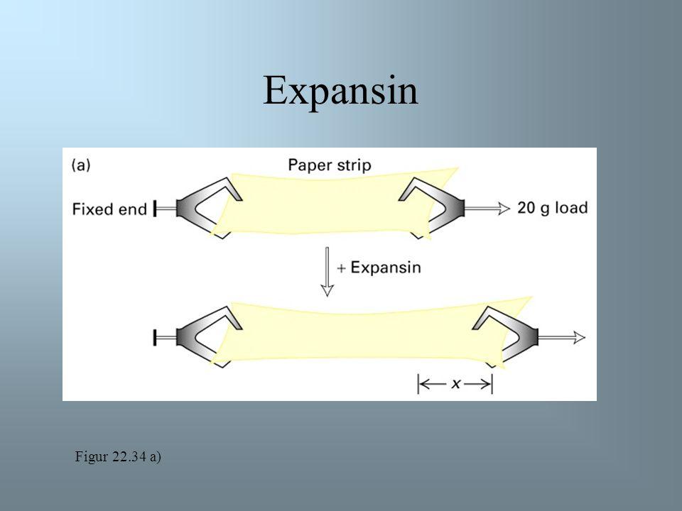 Expansin