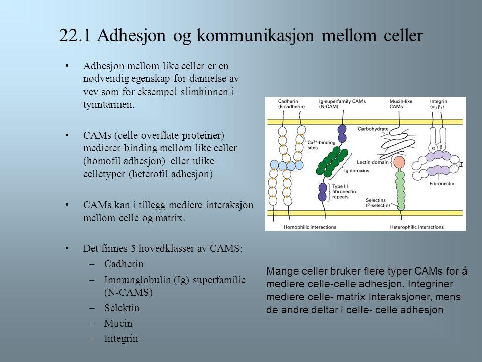 22.1 Adhesjon og kommunikasjon mellom celler