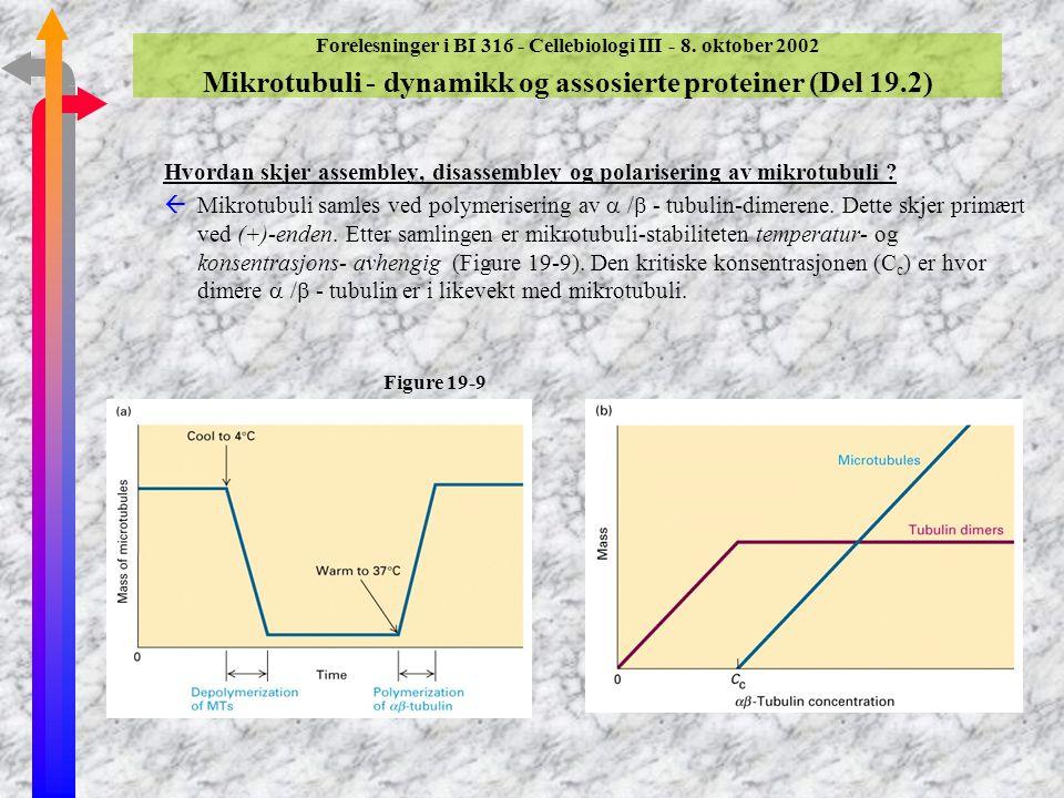 Hvordan skjer assembley, disassembley og polarisering av mikrotubuli