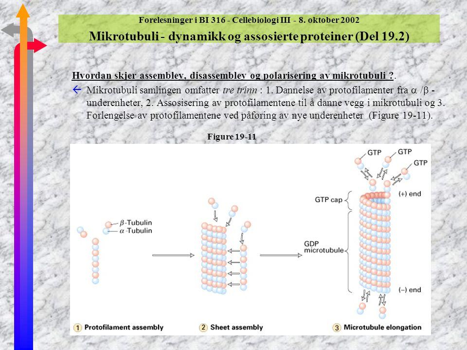 Forelesninger i BI 316 - Cellebiologi III - 8